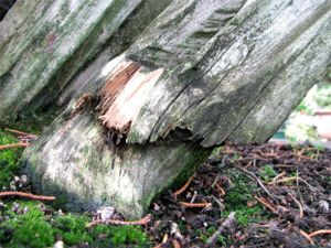 preserving deadwood image 8