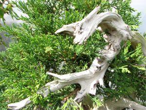 preserving deadwood image 14
